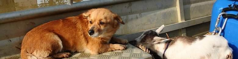 """""""Psi laju, a karavane prolaze"""": Milijuni u nezakonitoj prodaji pasa…"""