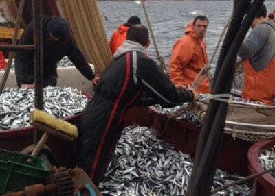 Tribunjski ribari besplatno podijelili tone ribe