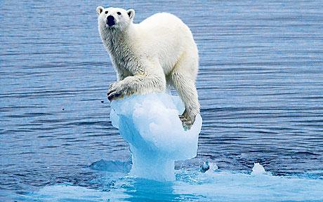 Klimatska nevolja je zadesila polarnog medu, a onda će i ostale (foto Facebook)