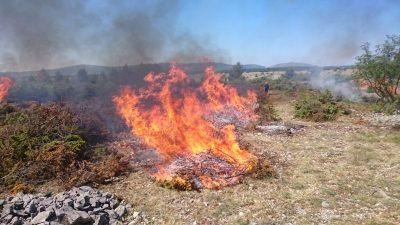 ZA VRIJEME: Istraživana površina za vrijeme kontroliranog paljenja(foto NP Krka)