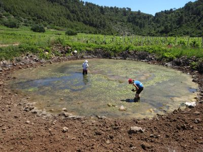 Započeo projekt Očuvanje vlažnih staništa na otocima Sredozemlja