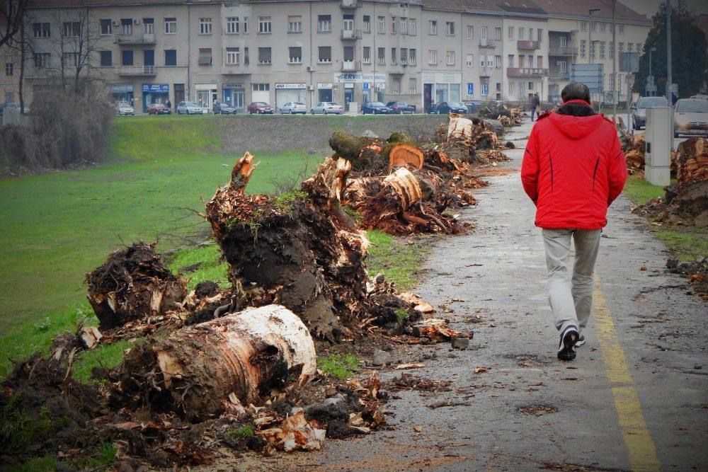 'Zaštićeni' drvored u karlovačkoj Draškovićevoj ulici (foto TRIS/G. Šimac)