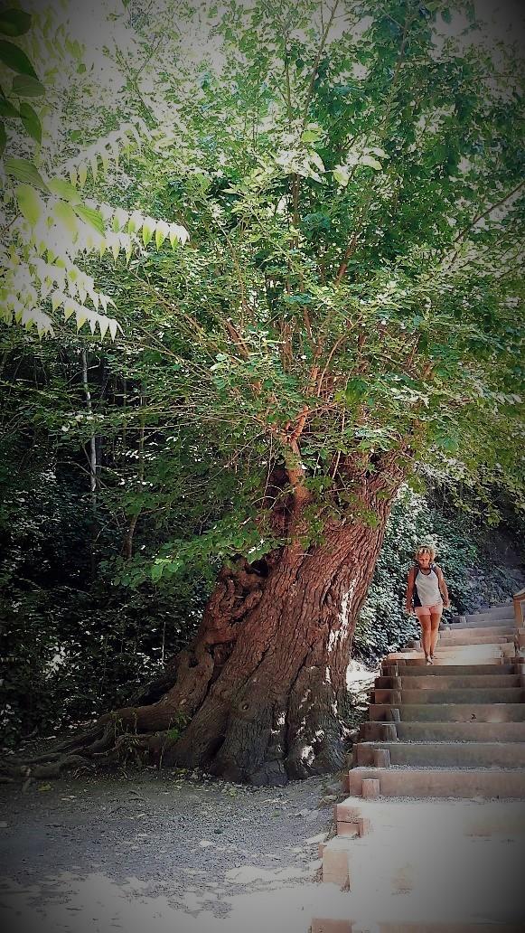 NP Krka: Dan stabla, stoljetni hlad slatke murve i četvero volontera