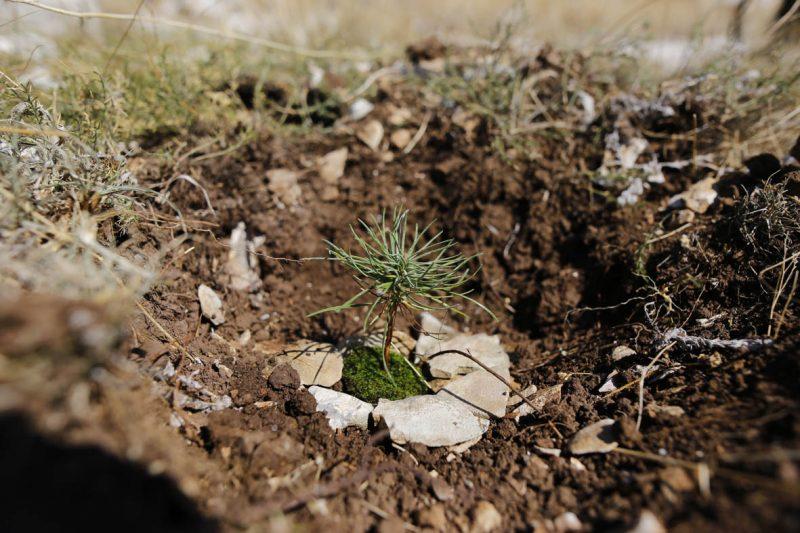 Boranka: 3000 novih stabala na zgarištu ispod Zvjezdanog sela na Mosoru