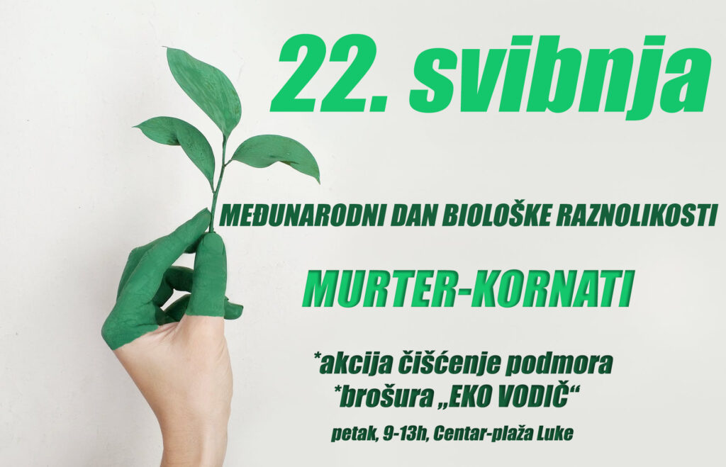 Obilježavanje Međunarodnog dana biološke raznolikosti u Murteru: Volonteri ronioci u akciji čišćenja podmorja