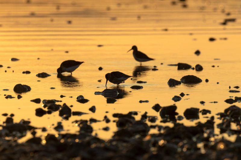 Proslava dana vlažnih staništa uz brojanje ptičica na Vranskom jezeru – 'mjestu na koje se ptice uvijek iznova vraćaju'