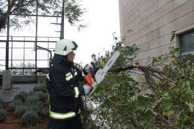 Nevrijeme u Šibeniku: Vatrogasci i radnici Zelenila zajednički uklonili srušeno stablo na Baldekinu