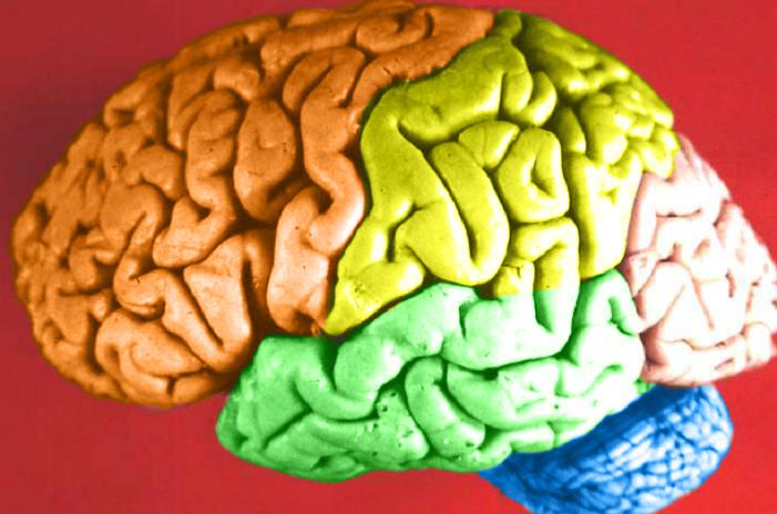 Mozak u boji (izvor: Wikimedija)