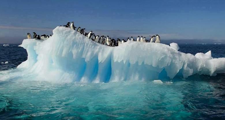 Pingvini na ledu koji se topi (foto: facebook)