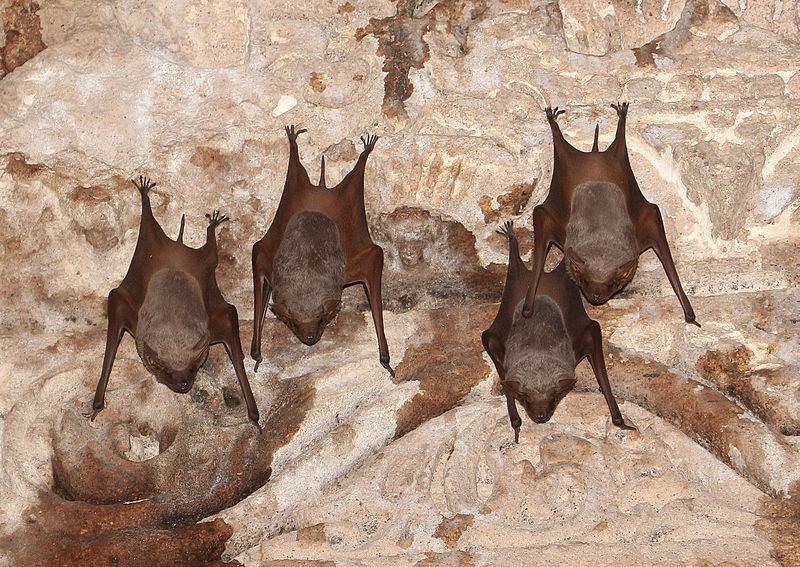 Uspavana družina visi (izvor Wikimedia Commons)