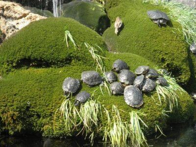 Fontana s kornjačama i ribicama – novi turistički brend Šibenika stvoren sa 150 kuna