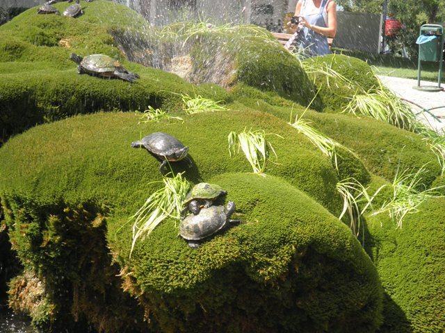 fontana, snimila : J. K.
