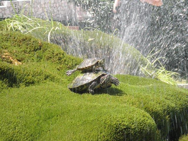 fontana, snimila : J . K.