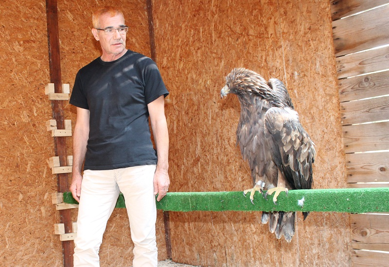 Spor oko skrbi nad ranjenim surim orlom: Država prijeti ukidanjem Sokolarskog centra!