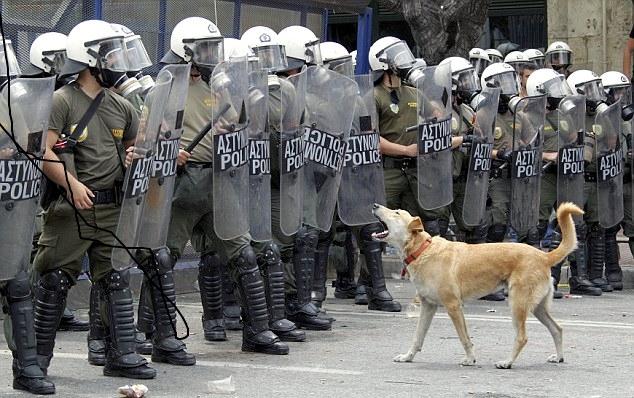 Neštedimice je lajao na oklopljene policajce (foto Facebook)