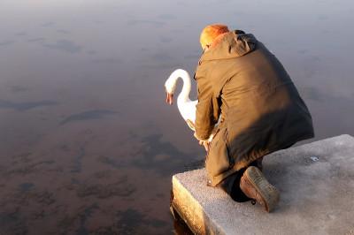 'Svi su labudi dobrodošli u Zablaće' – ranjenik sa šibenske rive našao je novi dom na Maloj Solini