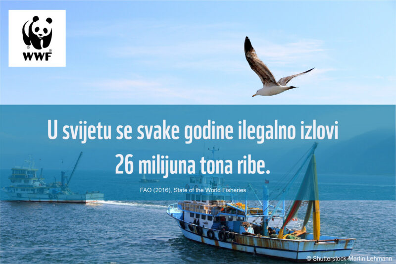 WWF: Neodrživi ribolov narušava sigurnost i stabilnost država članica EU-a