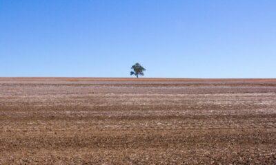 Ilustracija: Jedno stablo na pustopoljini