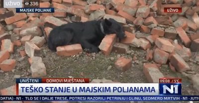 Potresna fotografija.-On čuva kuću. I dalje. Kuću koje više nema. #N1info #potres #MajskePoljane ? Kruno Perković - napisala je na društvenoj mreži novinarka Ivana Dragičević.