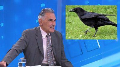 Fotomontaža: Pero Kovačević i vrana
