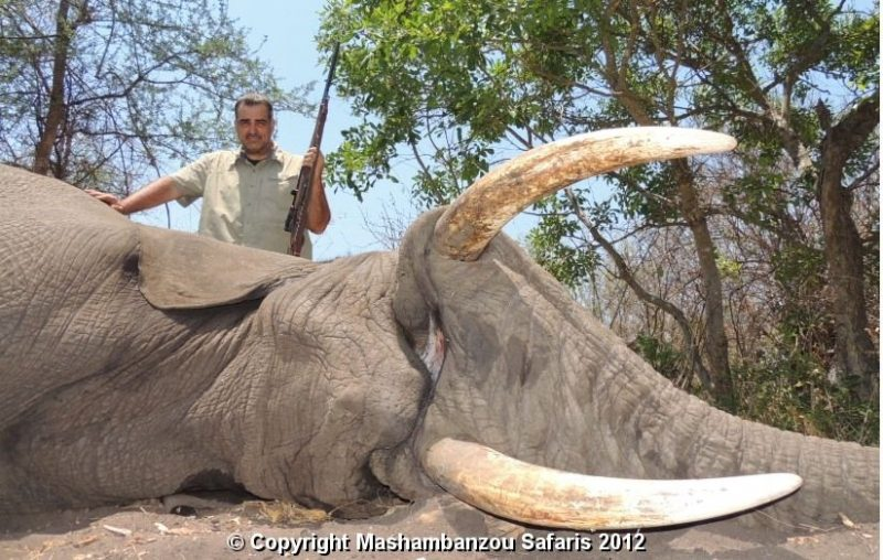 Ilustracija: 'Ugledni' HDZ-ovac N.V. nakon ubojstva slona