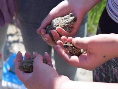 Blagdani prirode na Murteru: Lokve, žabe, punoglavci, stare majice, multipraktične tikve i čišćenje (tradicionalnog) podmorskog smeća